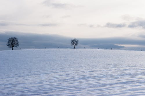 Snowy field with dry trees in countryside
