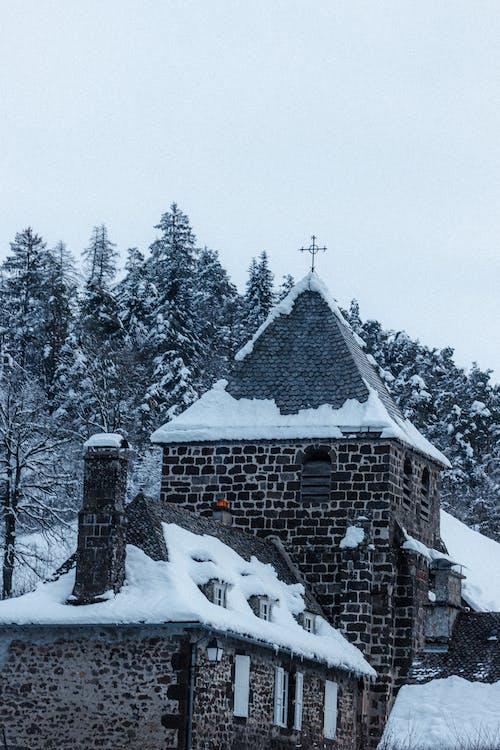 คลังภาพถ่ายฟรี ของ ICEE, กลางแจ้ง, คริสต์มาส, ต้นไม้