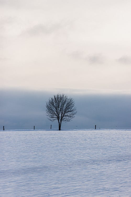 Lonely tree on snowy land under cloudy sky