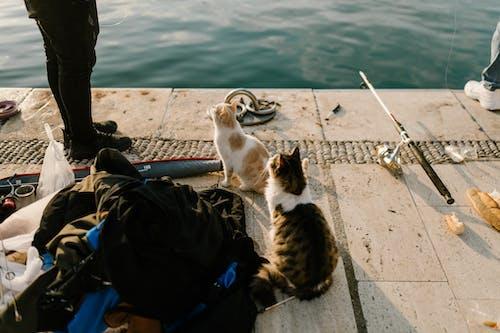 Darmowe zdjęcie z galerii z blog podróżniczy, indyk, kot, lato