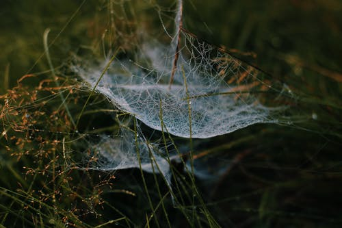 Thin bright spider web hanging on wet green grass in nature against blurred background in daytime