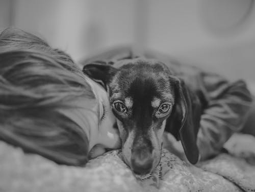 Free stock photo of animal, baby, bed, black and white