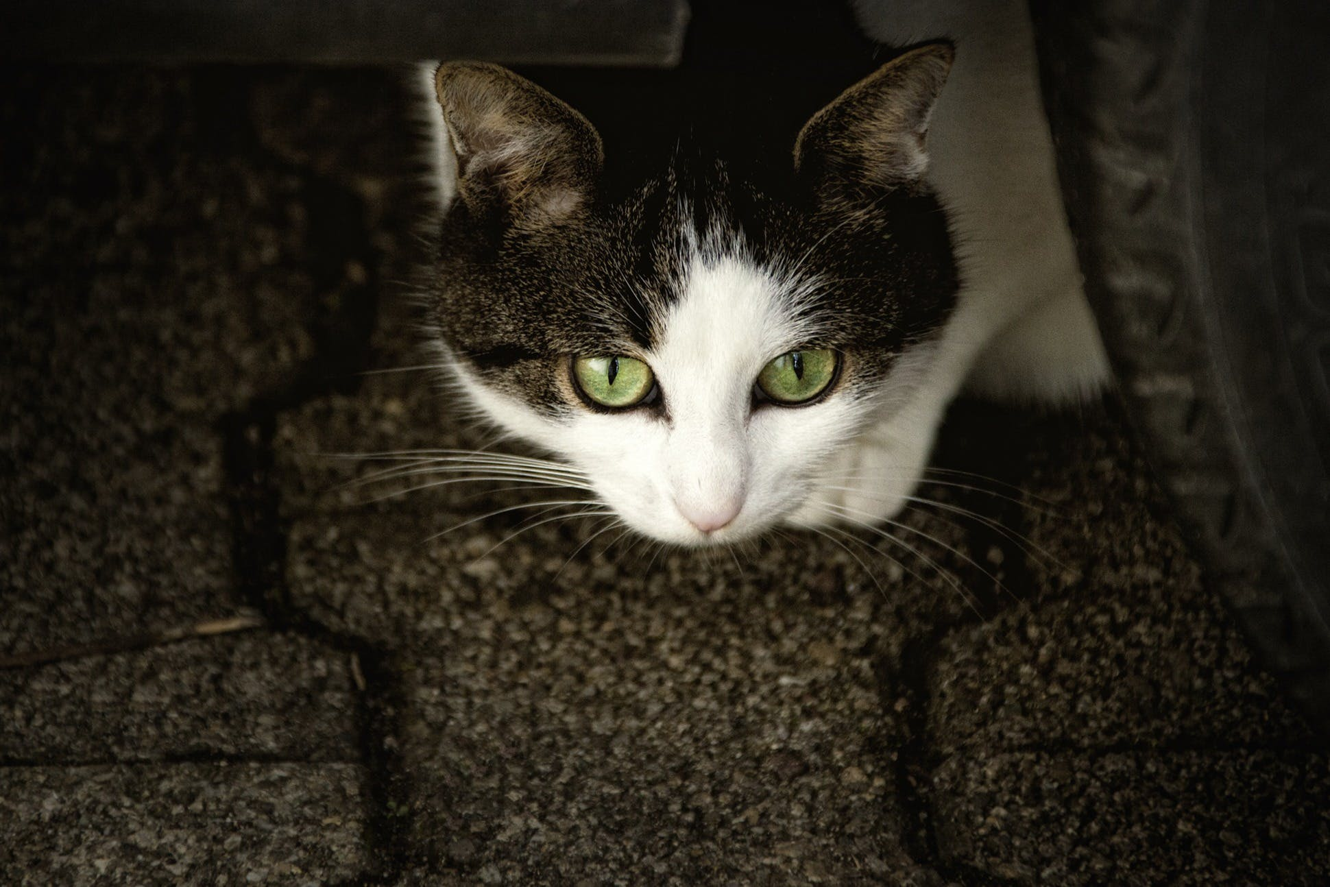 Black and White Cat Near