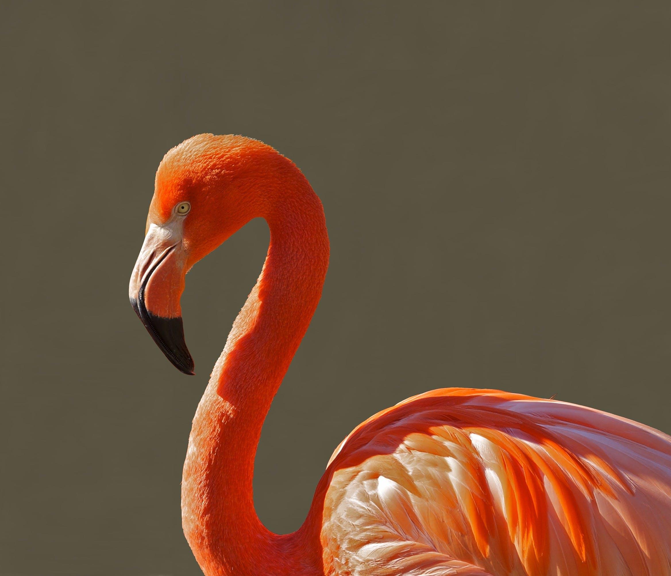 Orange Bird during Day Time