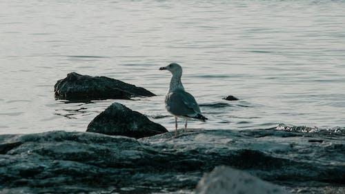 Uccello Bianco E Grigio Sulla Roccia Vicino Al Corpo D'acqua