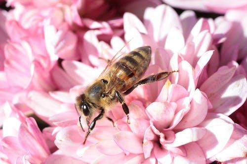 Základová fotografie zdarma na téma hmyz, kvést, květ, květiny