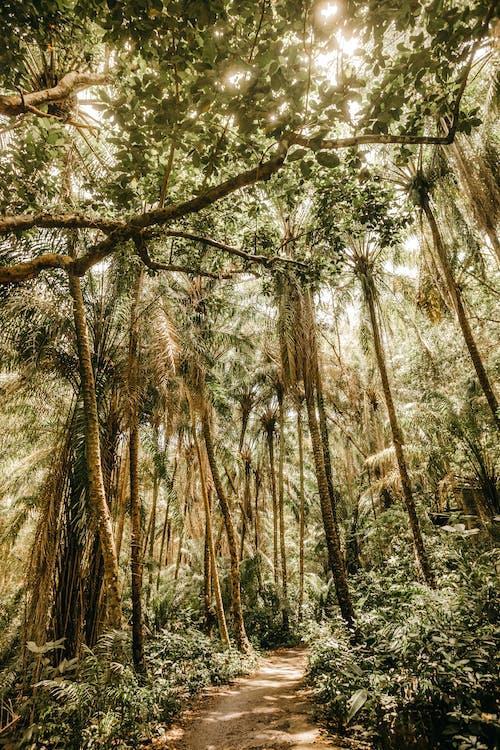 Narrow path between green trees in rainforest