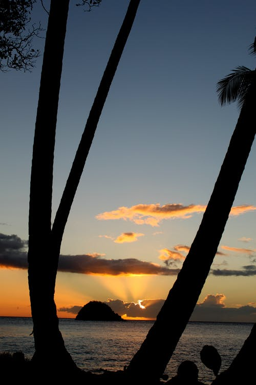 Foto d'estoc gratuïta de capvespre, cel, paisatge, palmeres