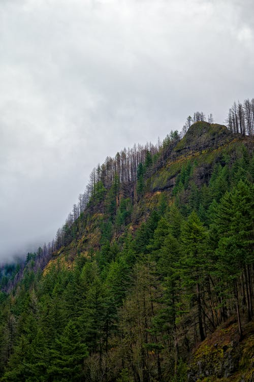 Mountain ridge covered with green trees under overcast sky