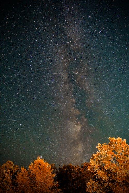 オリオン, スペース, 占星術の無料の写真素材