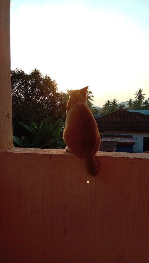 Imagine de stoc gratuită din mâță, pisică, portocala pisica