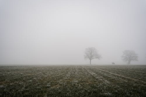 緑の芝生のフィールドの葉のない木