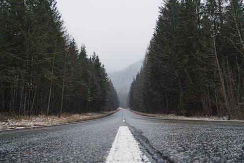 緑の木々の間の灰色のアスファルト道路
