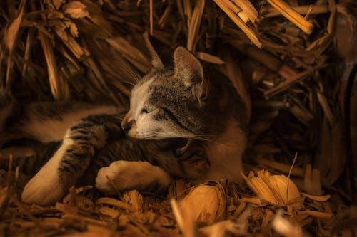 Close Up Shot of a Cat