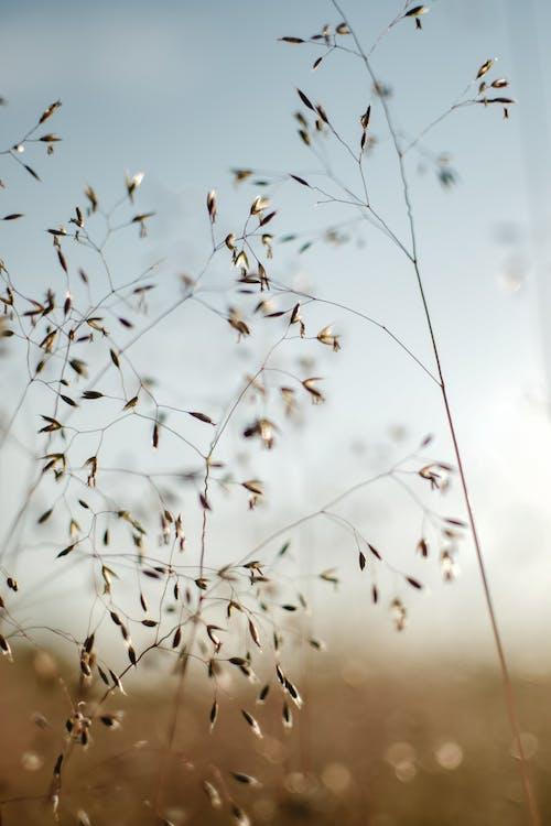 Free stock photo of bird, blur, clear sky