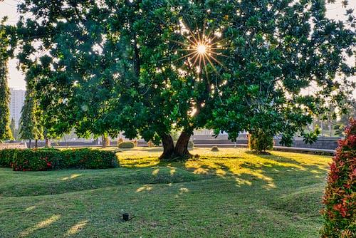 Tall green tree in garden