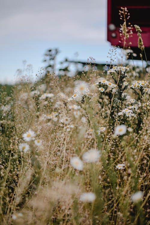 乾草地, 乾草田, 增長 的 免費圖庫相片