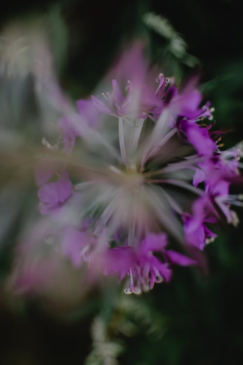 紫色的小花在轉移鏡頭