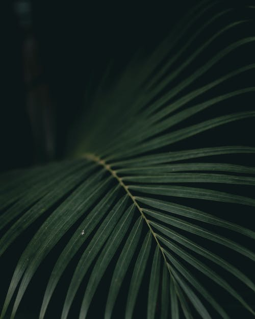 Scenic view of lush tropical plant with thin stem and wavy foliage in woods