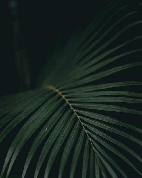 Imagine de stoc gratuită din amurg, angiosperme, arecaceae