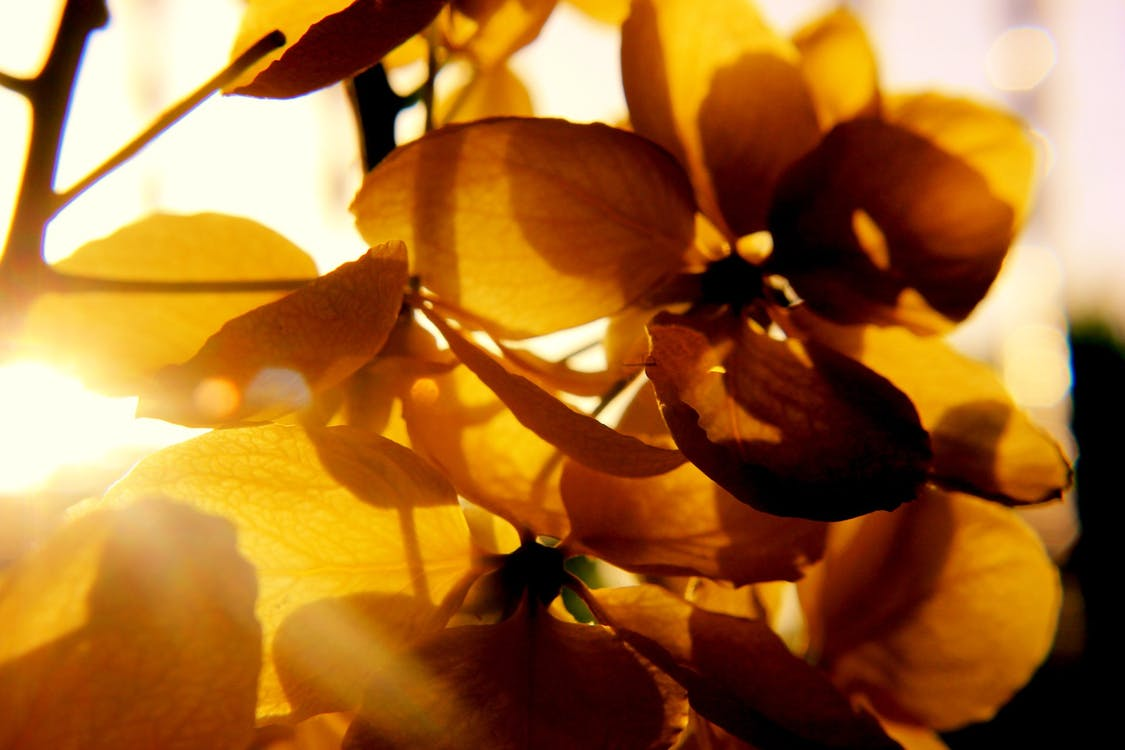 Photography of Petal Flower