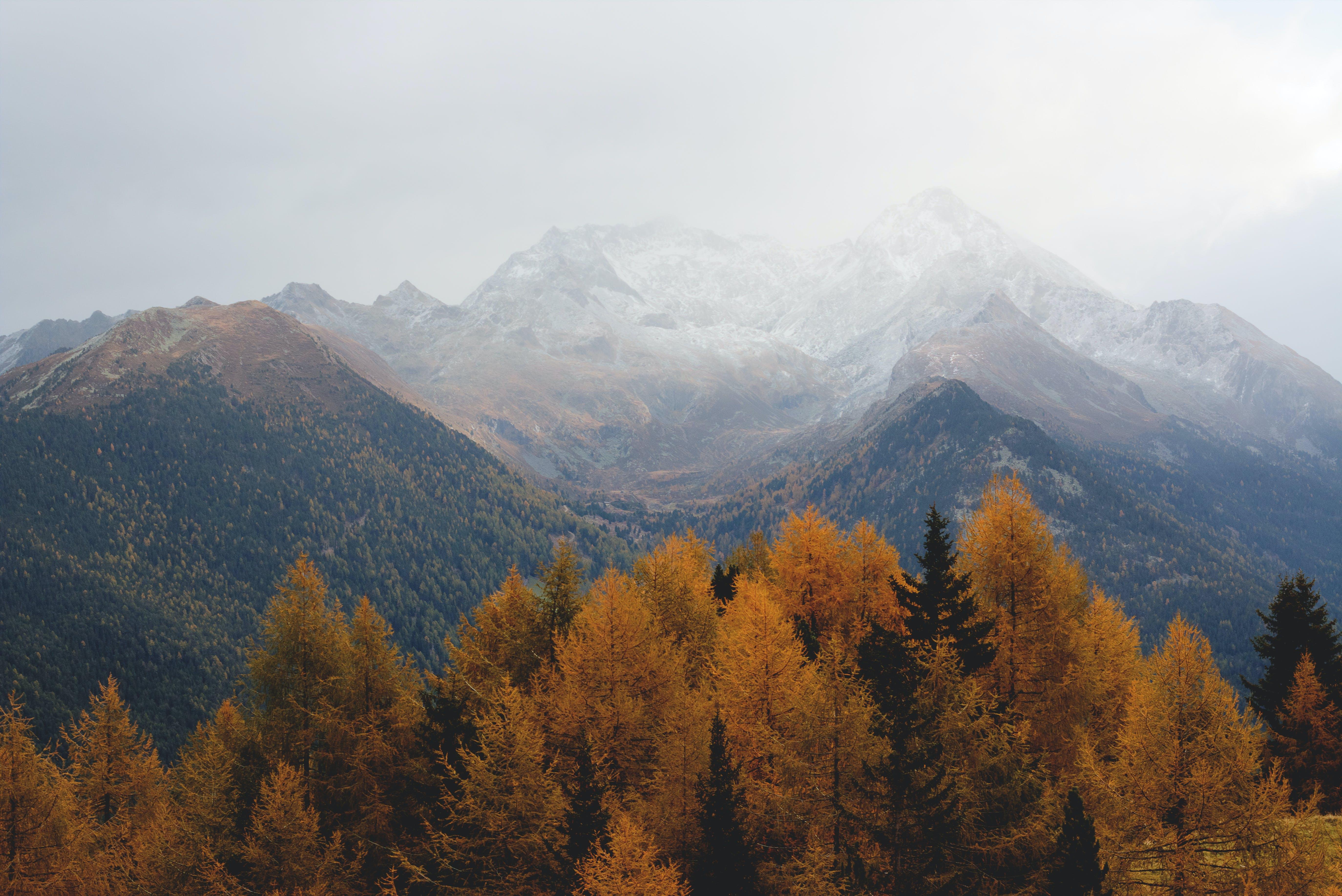 abenteuer, bäume, berge