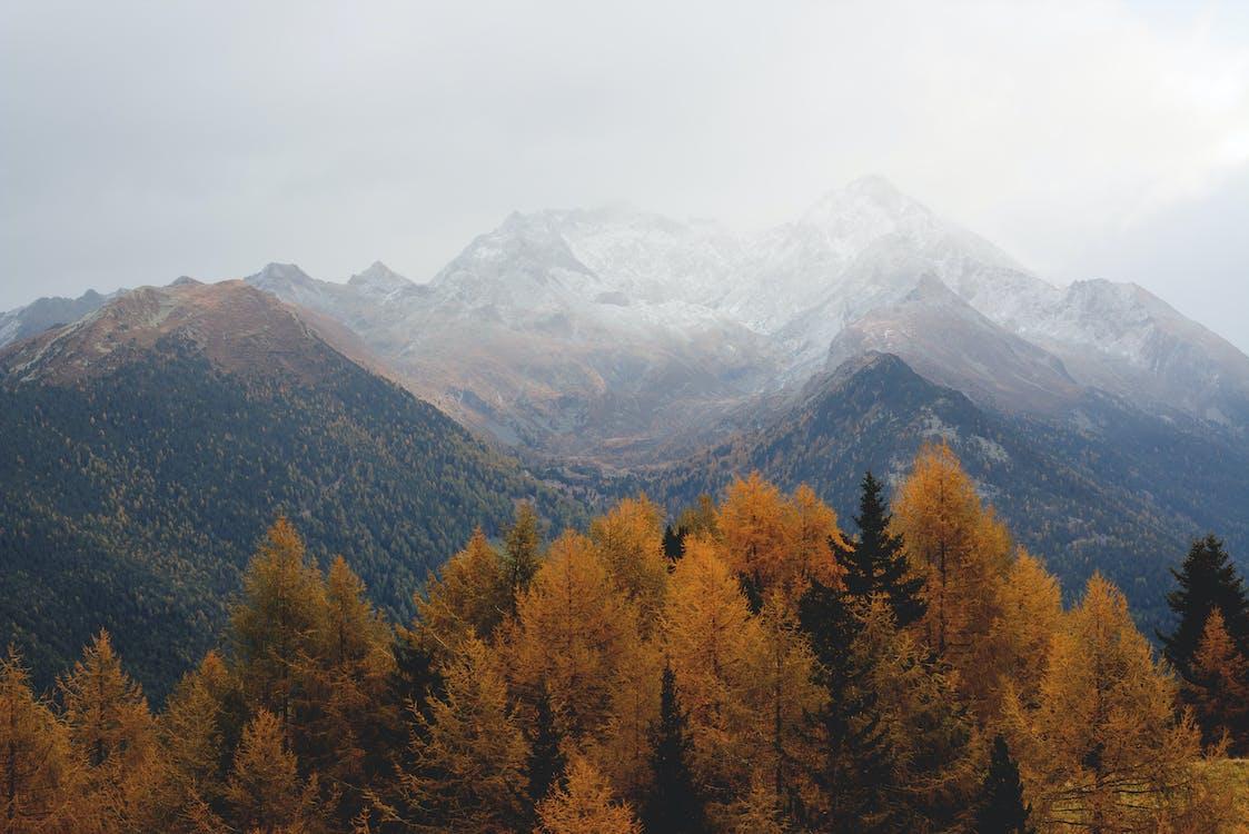 asztali háttérkép, ég, erdő