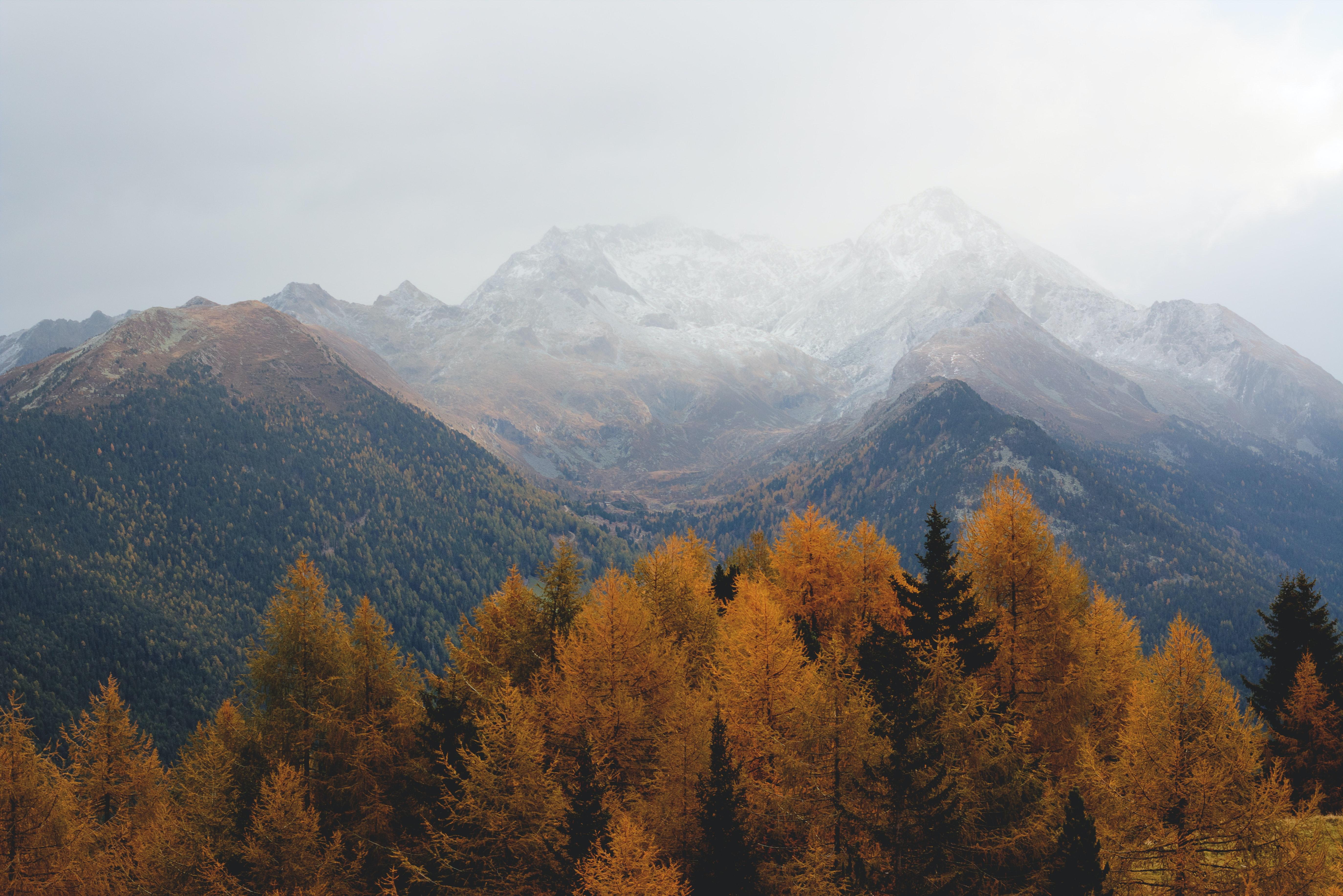 desktop wallpaper pexels free stock photos