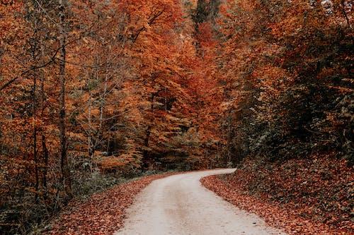 Grijze Weg Tussen Bruine Bomen
