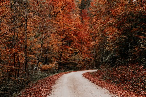 Rural road running through yellow autumn forest