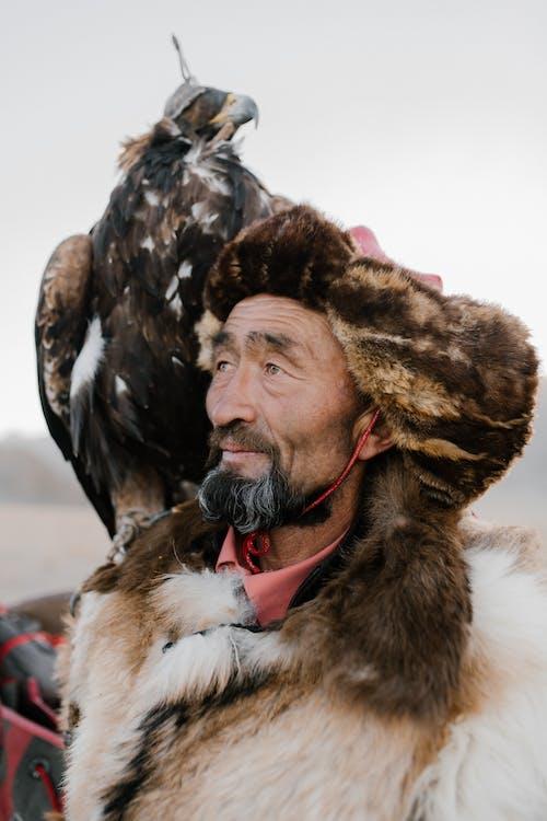 Foto d'estoc gratuïta de a l'aire lliure, abric, adult, àguila