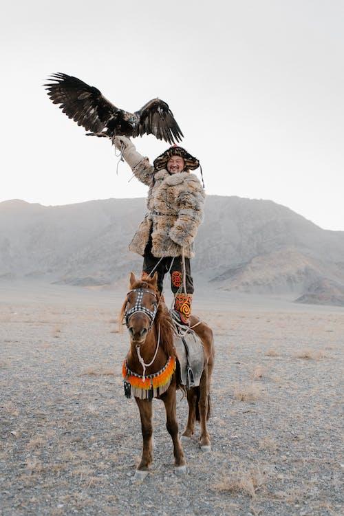 Gratis stockfoto met adelaar, arend, aziatische mannen