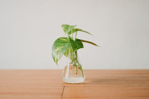 Seedling placed in water of glass container