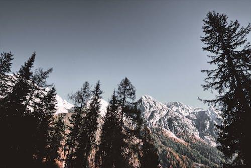 Foto stok gratis alam, alpine, beku, bidikan sudut sempit