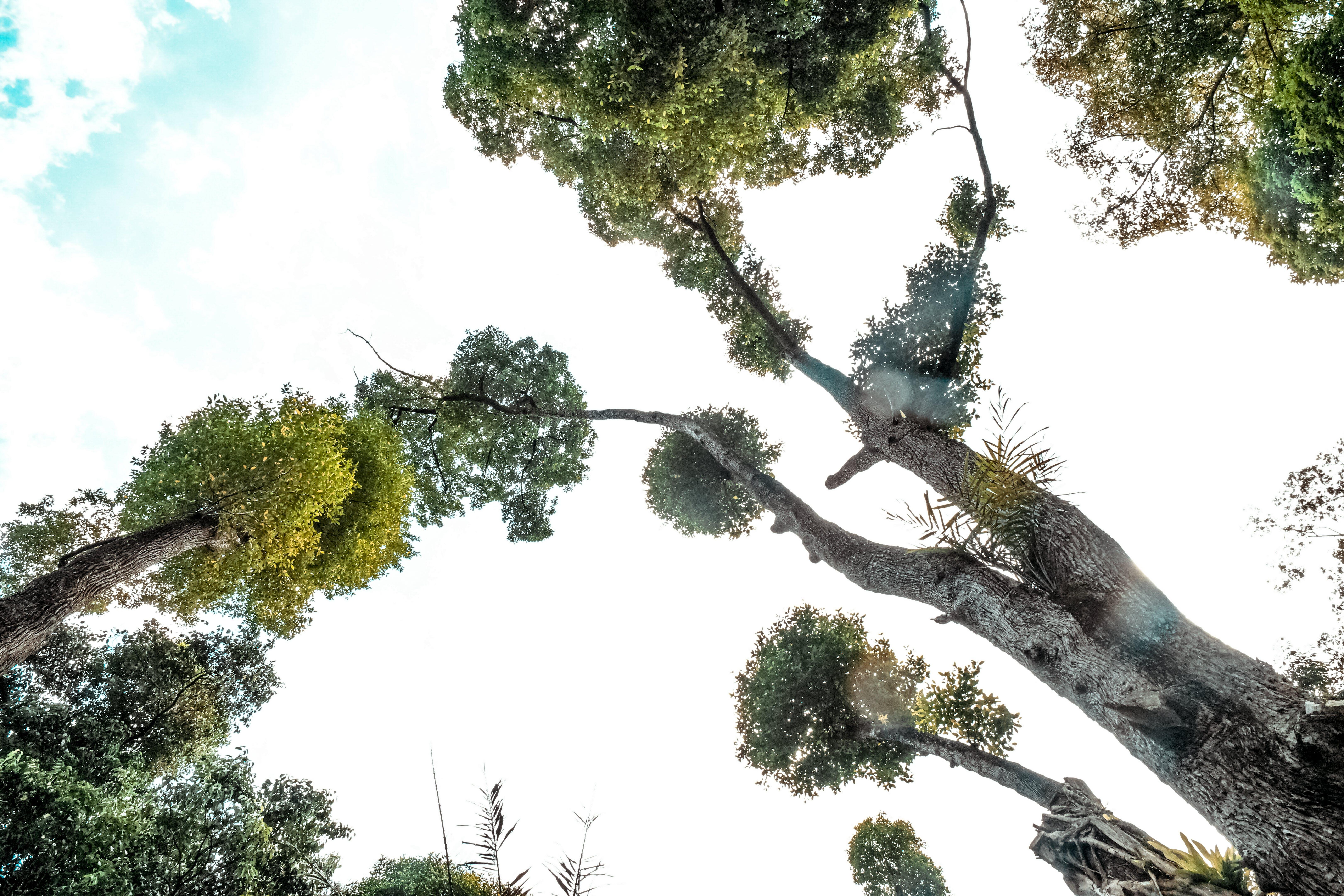 Kostenloses Stock Foto zu natur, himmel, bäume, pflanzen