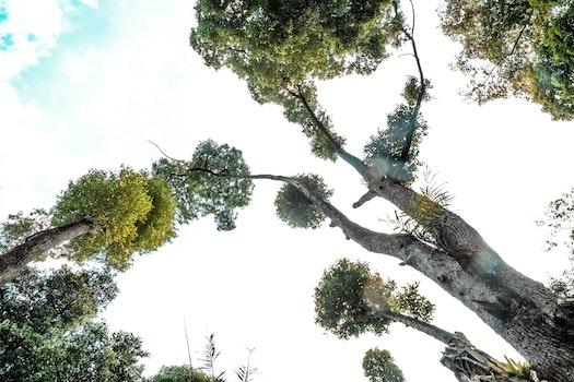 Grey Trunk Green Leaf Tree during Daytime