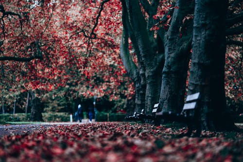 Autumn park with wooden benches
