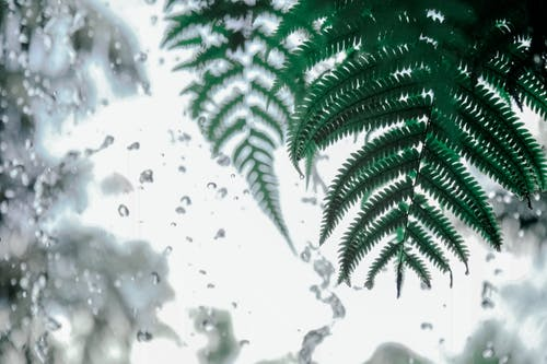 Foto profissional grátis de água, brilhante, clima, close