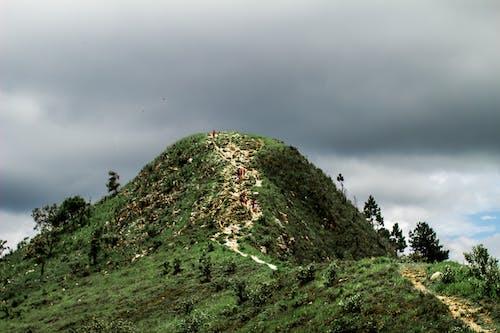 Free stock photo of brasil, brazil, green, hiking trail