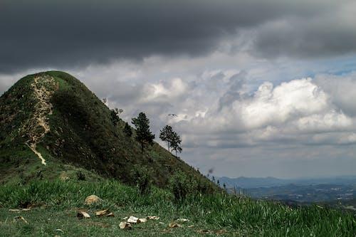 Free stock photo of brasil, brazil, cloudy, green
