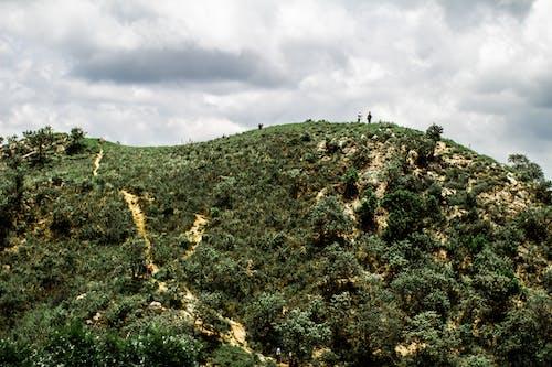 Foto profissional grátis de Brasil, colina, ecológico, montanha