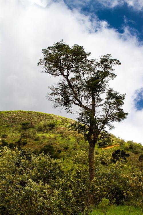 Δωρεάν στοκ φωτογραφιών με βουνό, Βραζιλία, δέντρο, λόφος