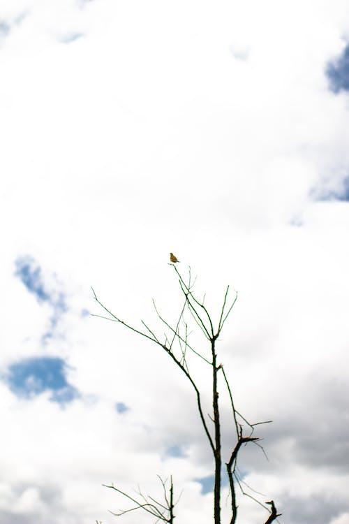 Foto profissional grátis de árvore, ave, Brasil, céu