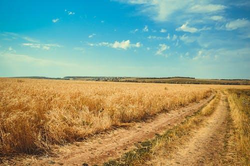 Imagine de stoc gratuită din cale, câmp, centrale, cer