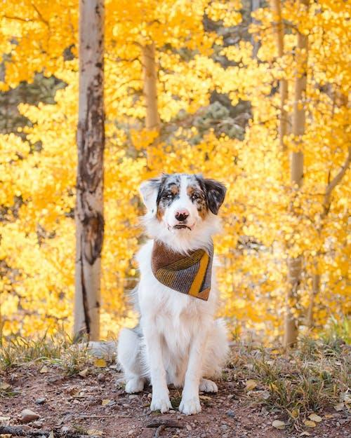 坐在綠草地上的白色和黑色短塗的狗
