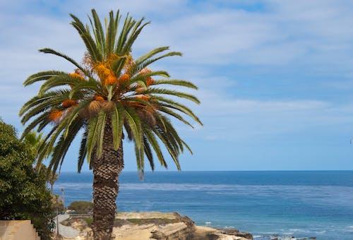 Free stock photo of beach, california, la jolla