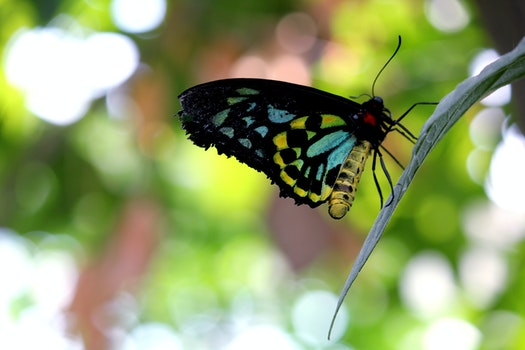 Blue Black Yellow Butterfly
