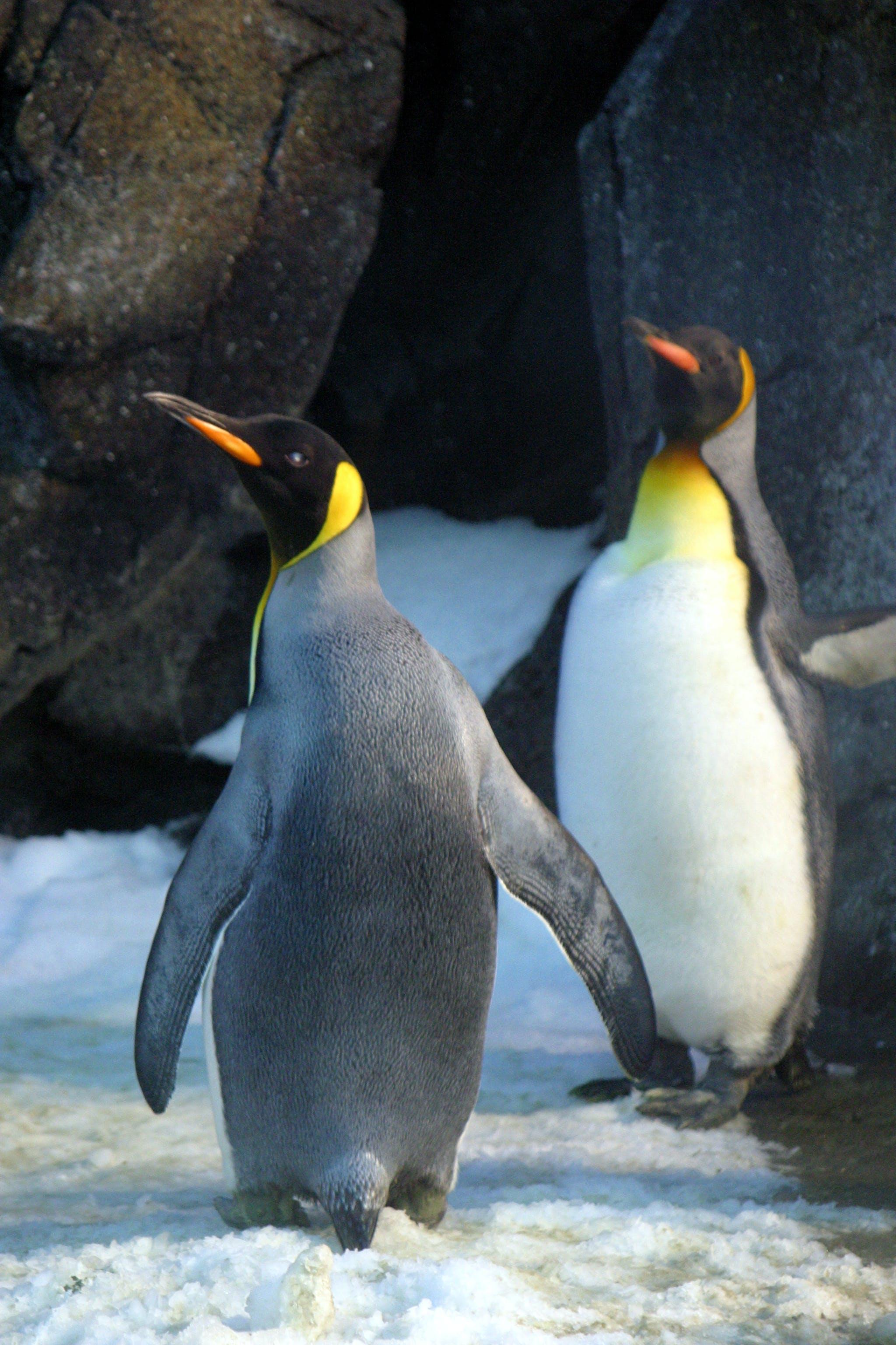 Kostenloses Stock Foto zu antarktis, eis, eisig, flossen