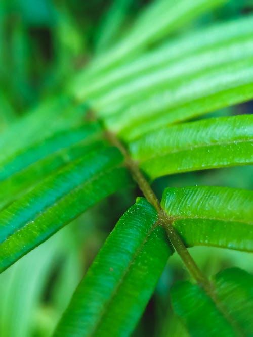 Fotos de stock gratuitas de césped, de hierbas, helecho