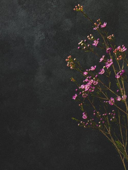 Immagine gratuita di carino, fiore che sboccia, fiori che sbocciano, fiori rosa